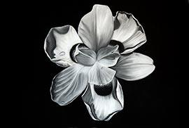 Flower Series #III - Drawing by Kendall-Leigh Nash