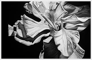 Hibiscus III - Drawing by Kendall-Leigh Nash